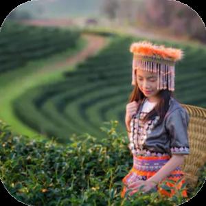 Bio Thee: China